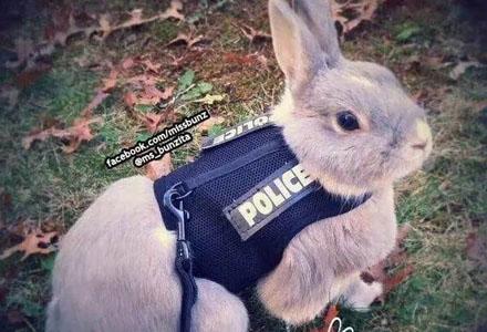 """小模样萌翻了!《疯狂动物城》里朱迪警官的现实真""""兔""""版!"""