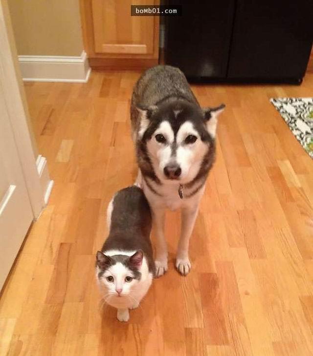 长得相似的动物
