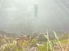 带你看不一样的海底 美图之天刀水族箱