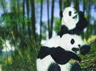 温馨温情天刀双熊猫美图 你是我的国宝